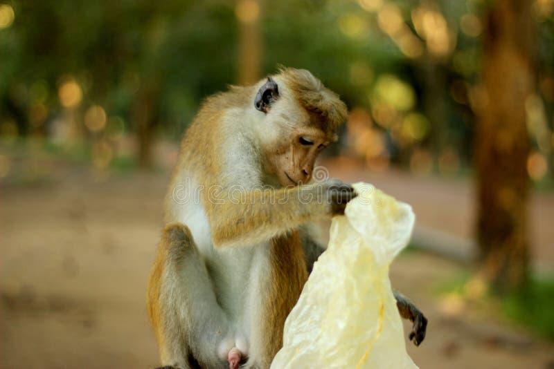猴子和残骸 免版税库存照片