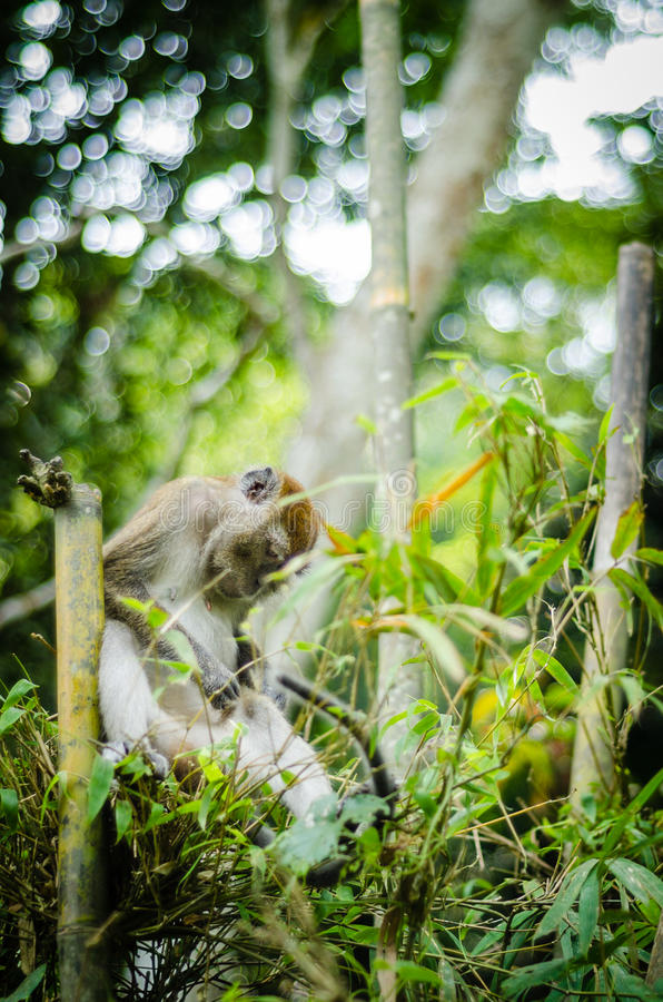 猴子在密林 免版税库存图片