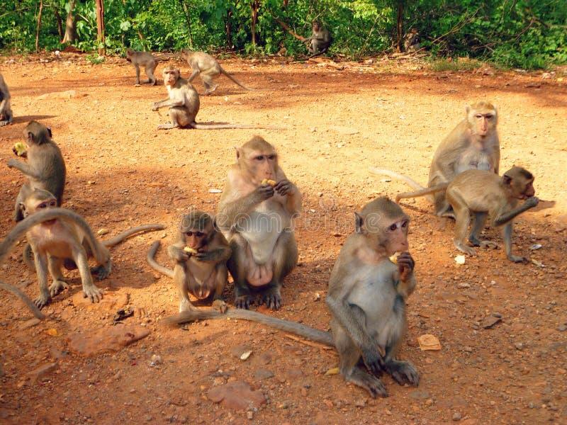 猴子在泰国 免版税库存照片