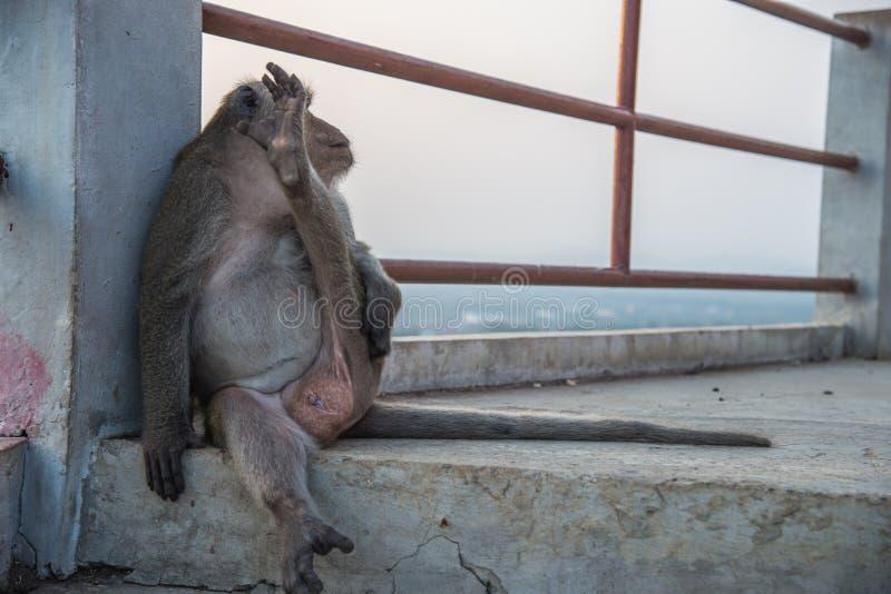 猴子坐乏味生活 免版税图库摄影