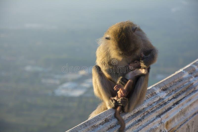 猴子妈妈 免版税图库摄影
