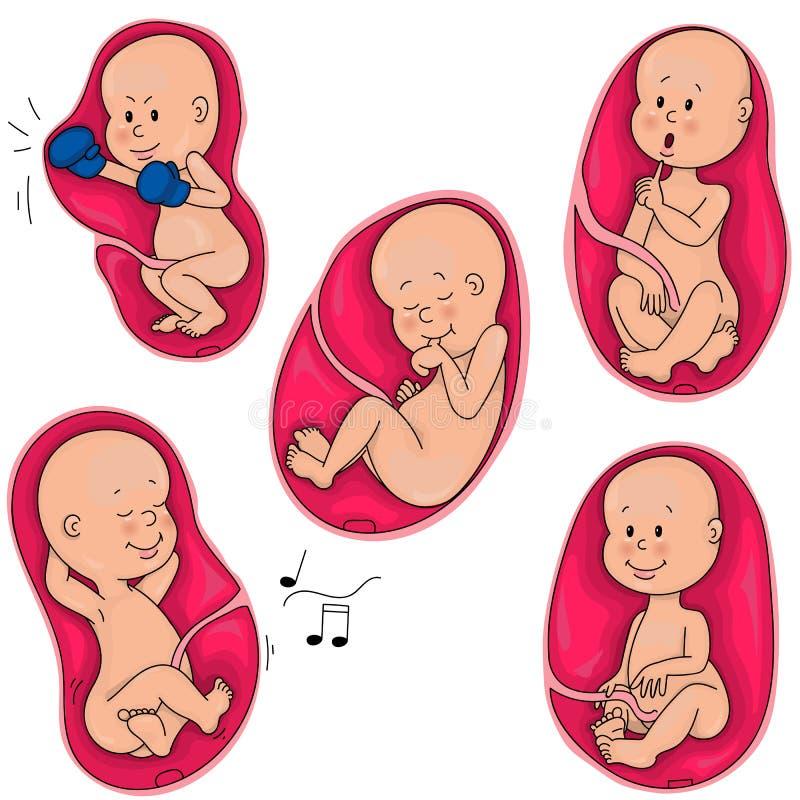 子宫内生活 在母亲` s子宫的胎儿 孵出 向量例证