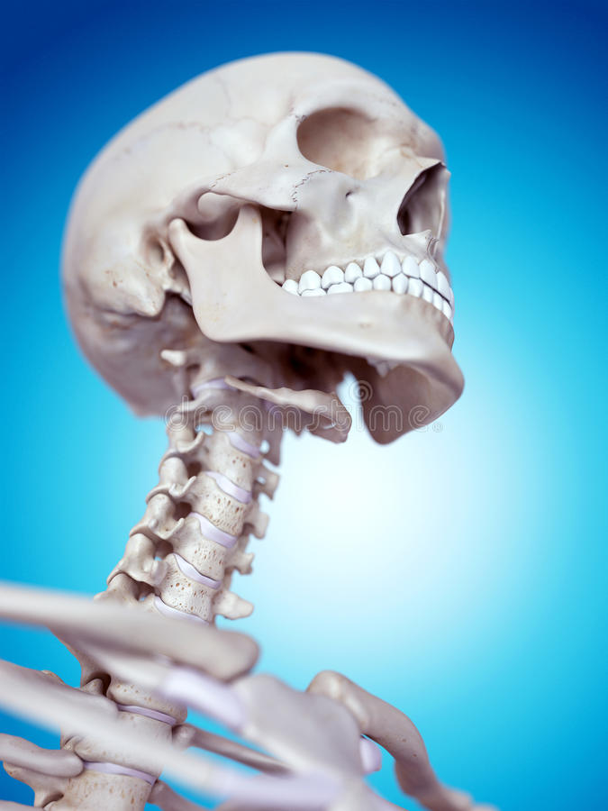子宫颈脊椎 皇族释放例证