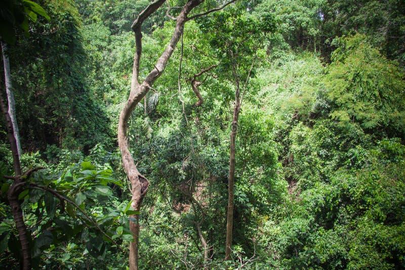 猴子森林在Ubud,巴厘岛 免版税库存图片