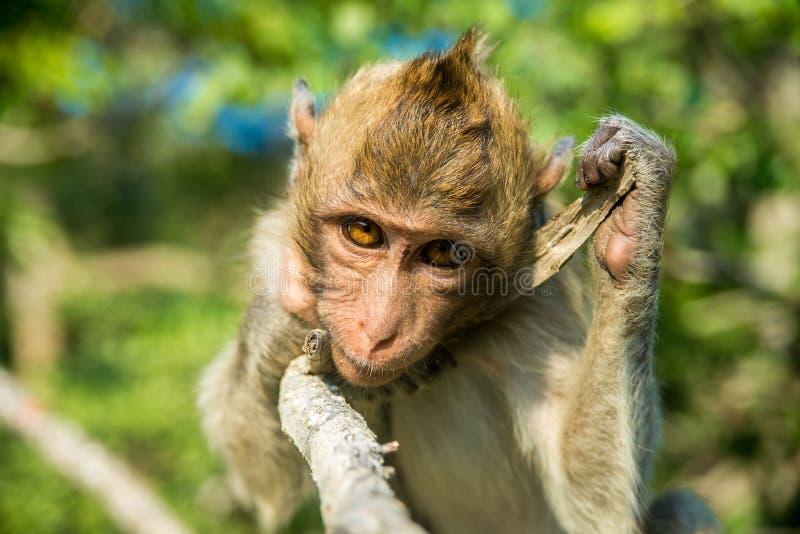 猴子纵向 库存图片