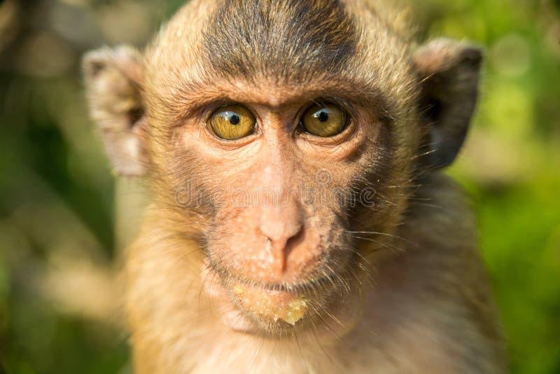 猴子纵向 免版税库存图片