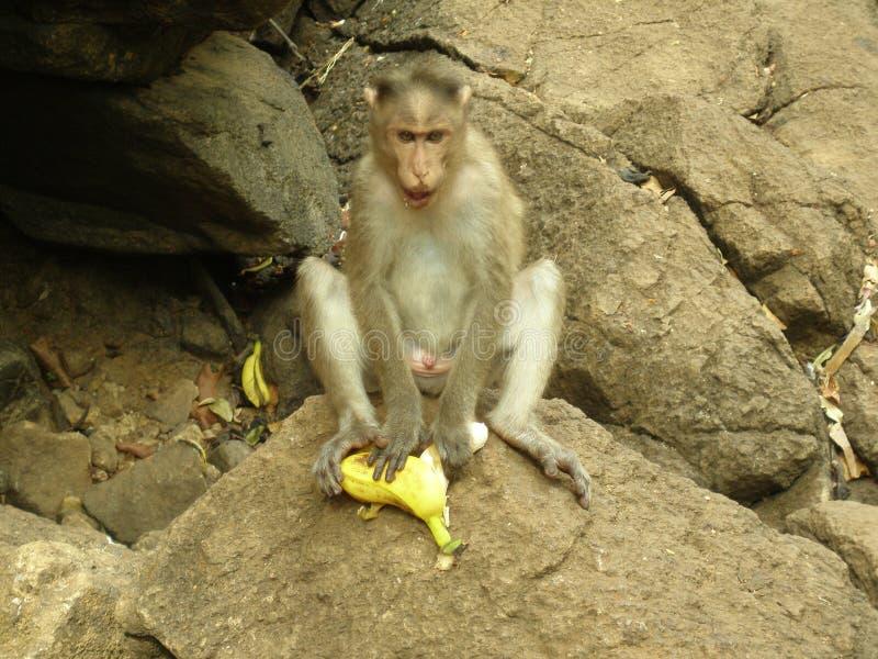 猴子超人 图库摄影