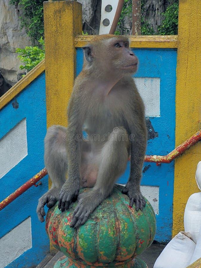 猴子betore洞 库存图片