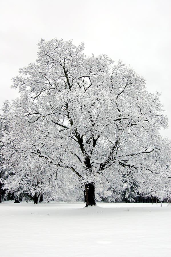 孑然冬天 库存图片