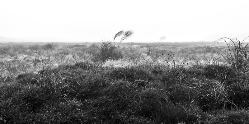 孑然在秋天 在早晨薄雾的黑白风景 免版税库存图片