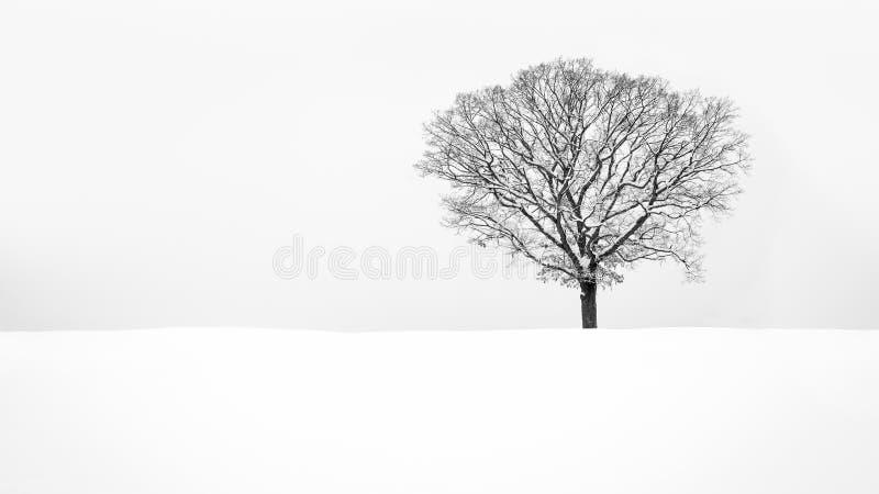 孑然-孤立多雪的树 免版税库存图片