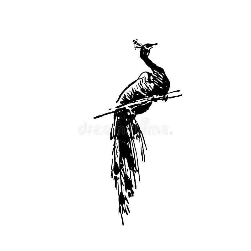 孔雀在白色背景的鸟黑色手拉的剪影  库存例证