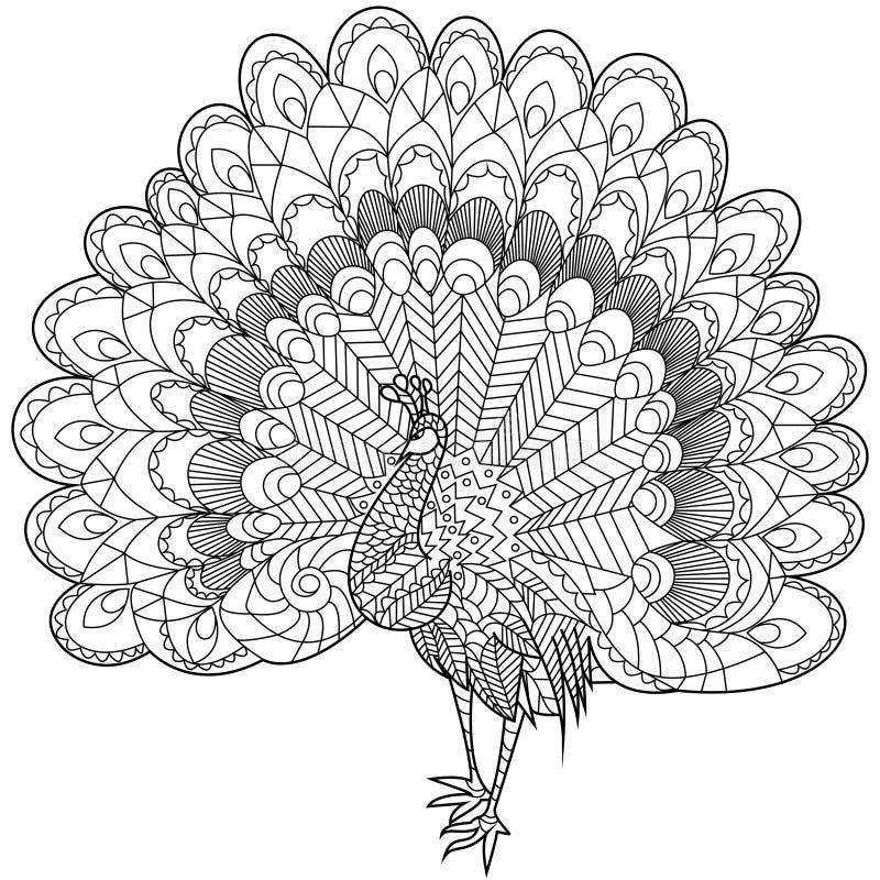 孔雀成人的着色传染媒介