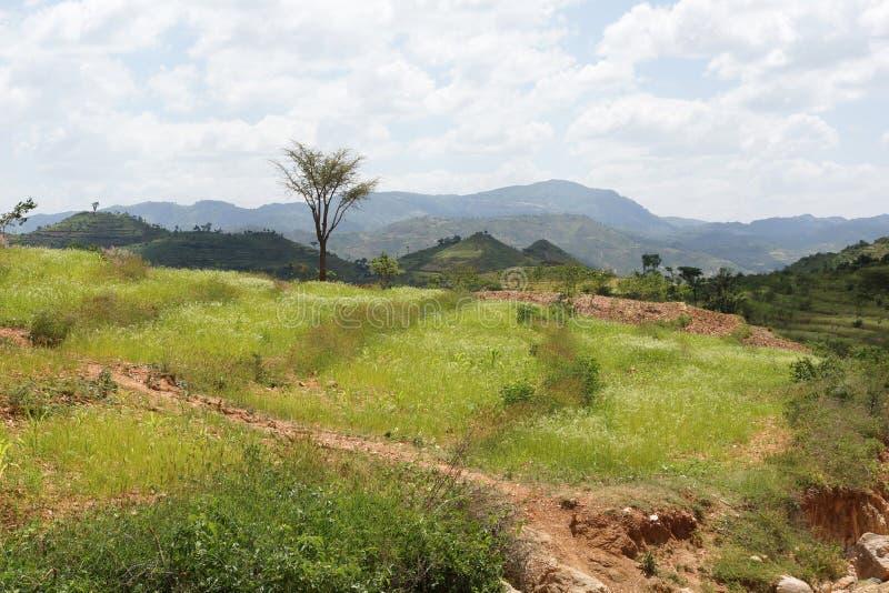 孔索,埃塞俄比亚,非洲 库存照片