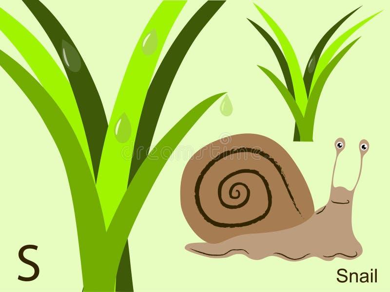 字母表动物看板卡闪光s蜗牛 库存例证