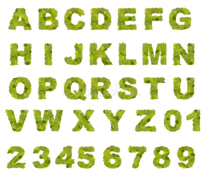字母表绿色叶子 库存图片