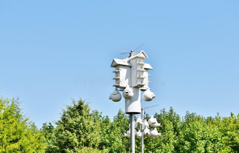 孟买勾子野生生物北美洲紫燕鸟舍 免版税库存照片