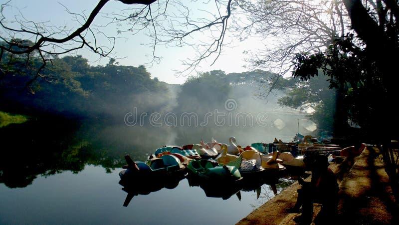 孟买国家公园早晨早晨好步行密集的森林在孟买绿色树和蓝天惊人的经验的心脏 库存照片