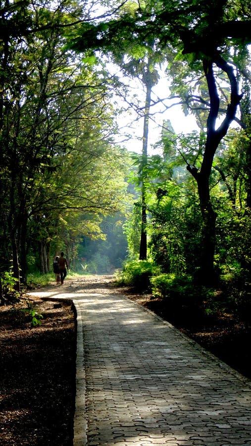 孟买国家公园早晨早晨好步行密集的森林在孟买绿色树和蓝天惊人的经验的心脏 免版税库存照片