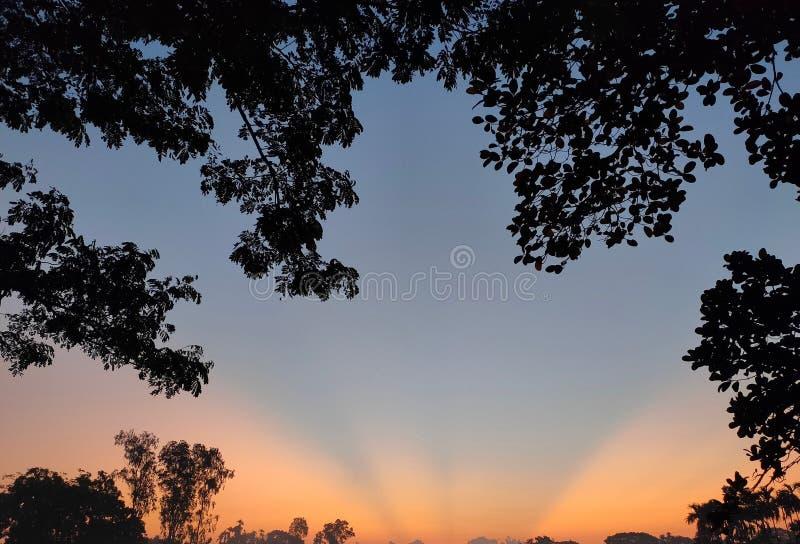 孟加国早美 库存照片