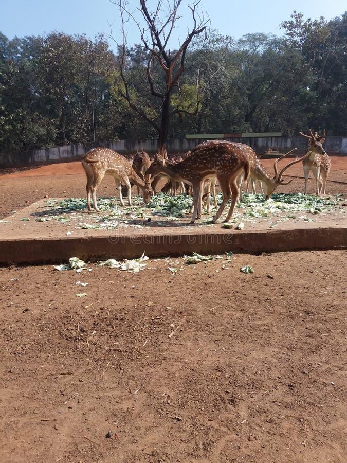 孟加拉国动物园 库存照片
