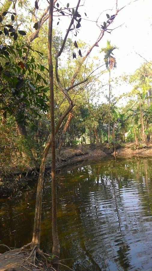 孟加拉国的村庄池塘 免版税库存照片
