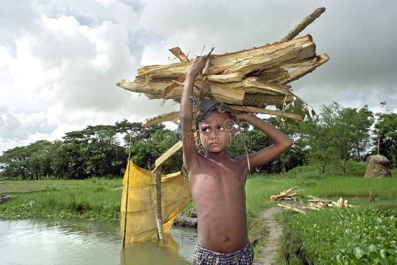 孟加拉国的男孩走用力拖堆木柴 免版税库存图片