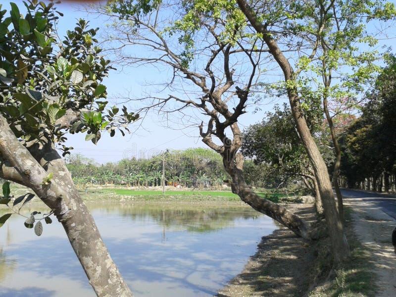 孟加拉Mymensingh的自然美 库存图片