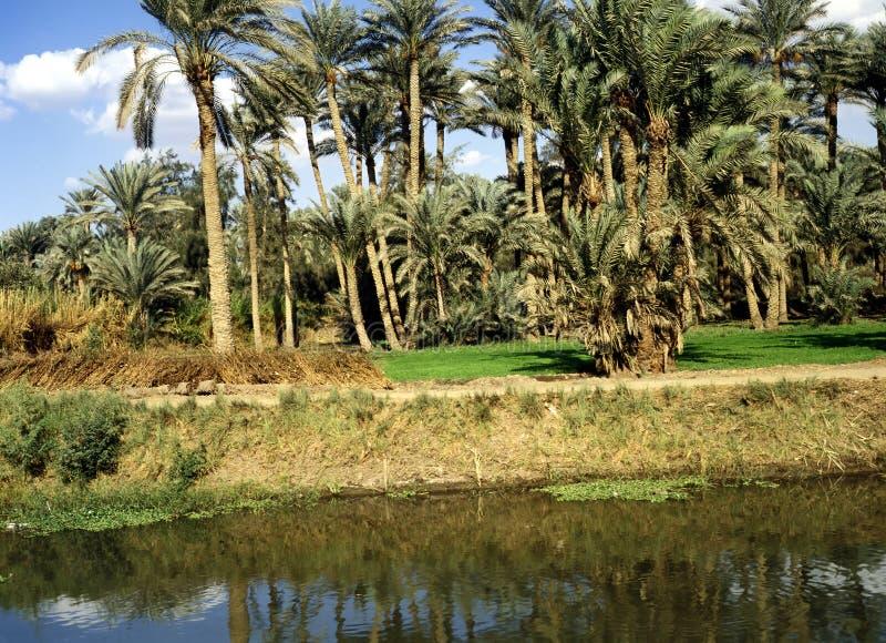孟菲斯,埃及 库存照片