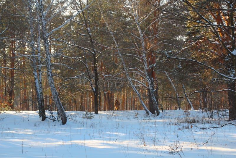 季节、圣诞节、饮料和人概念-有杯子的愉快的微笑的少妇喝热的茶的在冬天森林里 库存图片