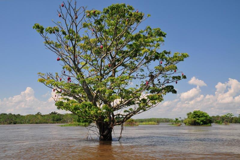 季节性亚马逊amazonia的洪水 免版税库存照片