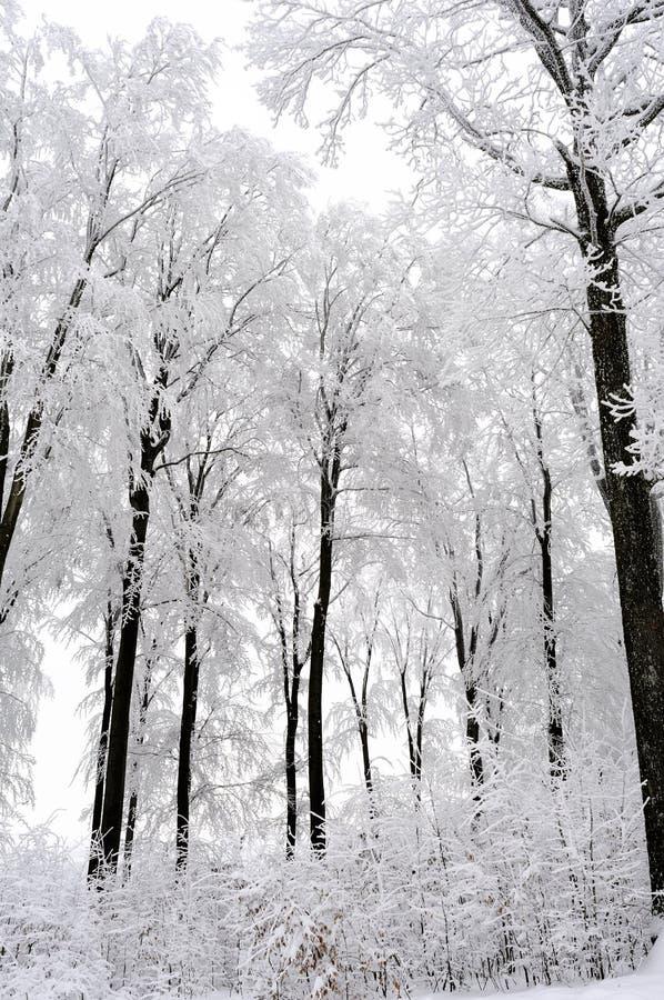 季节结构树白色冬天 免版税图库摄影