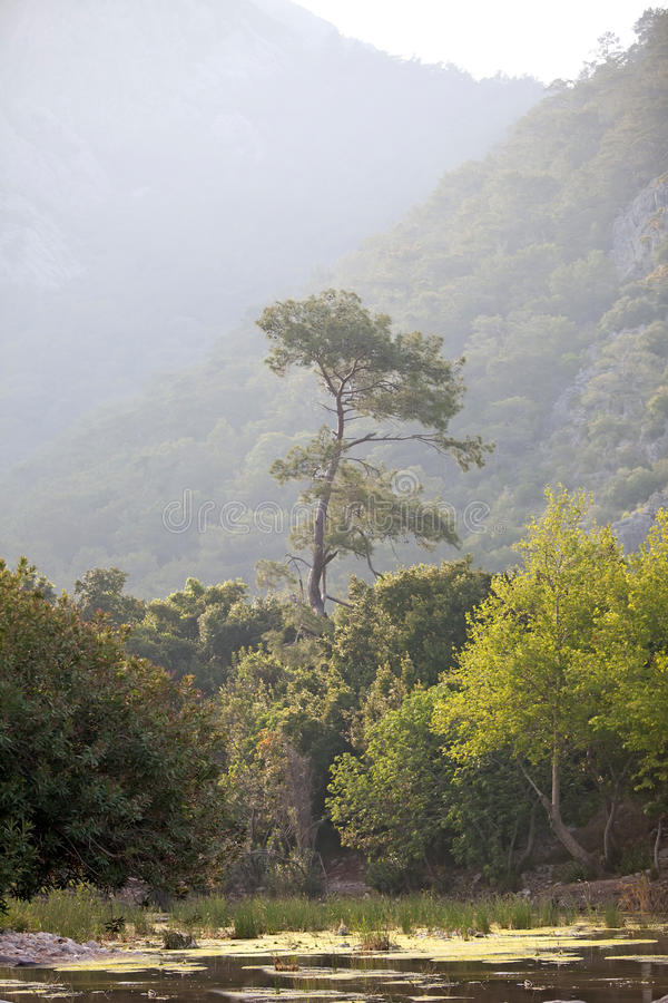 孤峰临近ond杉木 库存图片