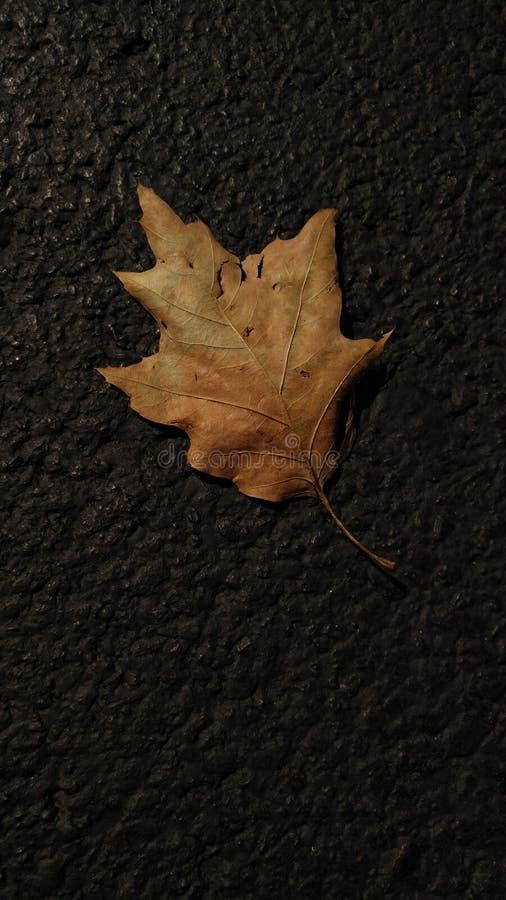 孤独在秋天 免版税库存图片