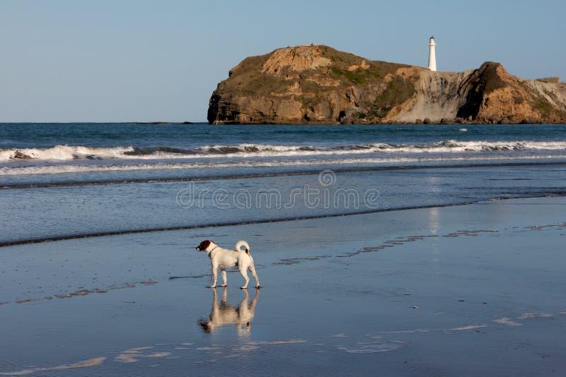 孤独海滩的狗 图库摄影