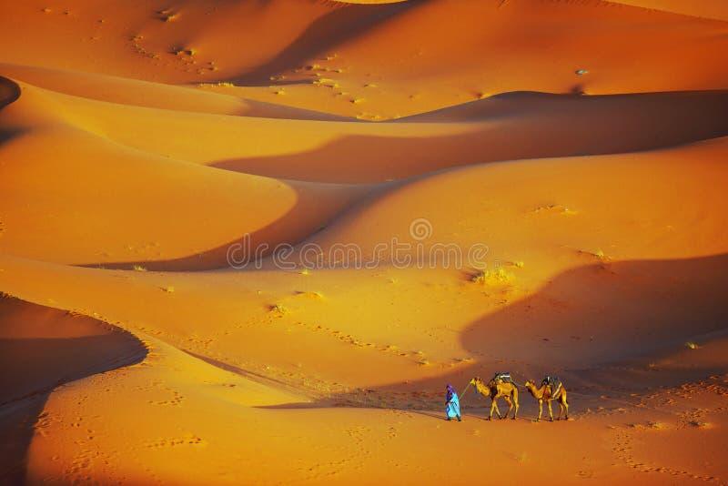 孤独的人和骆驼在撒哈拉大沙漠 免版税库存照片
