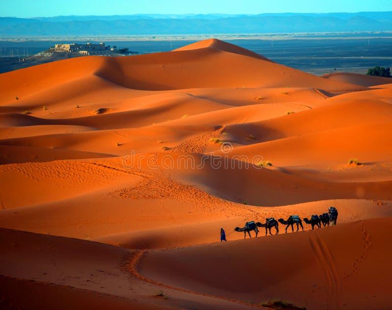 孤独的人和骆驼在日落的撒哈拉大沙漠 免版税库存照片