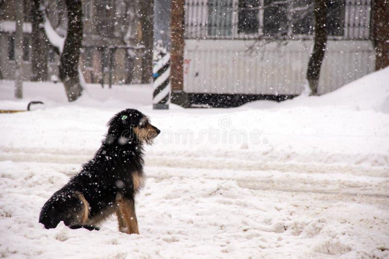 孤独的小狗狗坐街道在大雪期间并且等待她的大师 免版税图库摄影