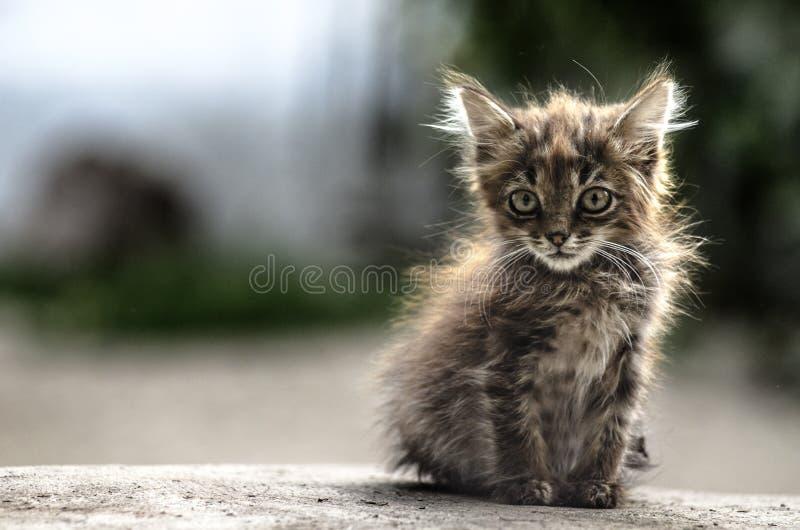 孤独的小猫 免版税库存照片