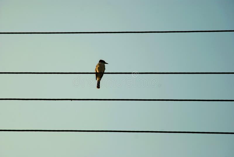 孤独的歌唱家 库存照片