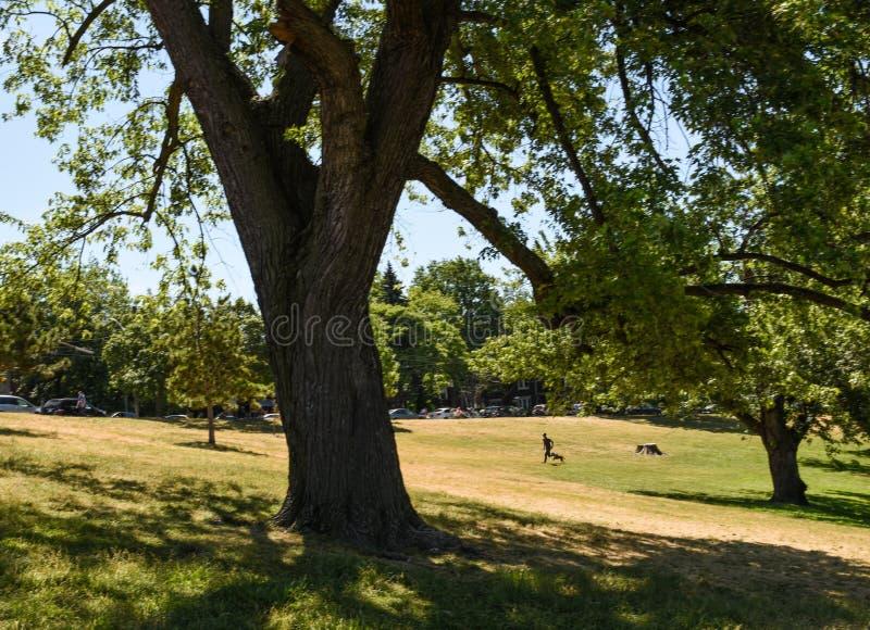 孤独的步行者在riverdale公园 库存图片