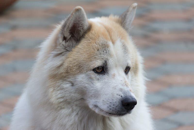 孤独的狗 免版税库存图片