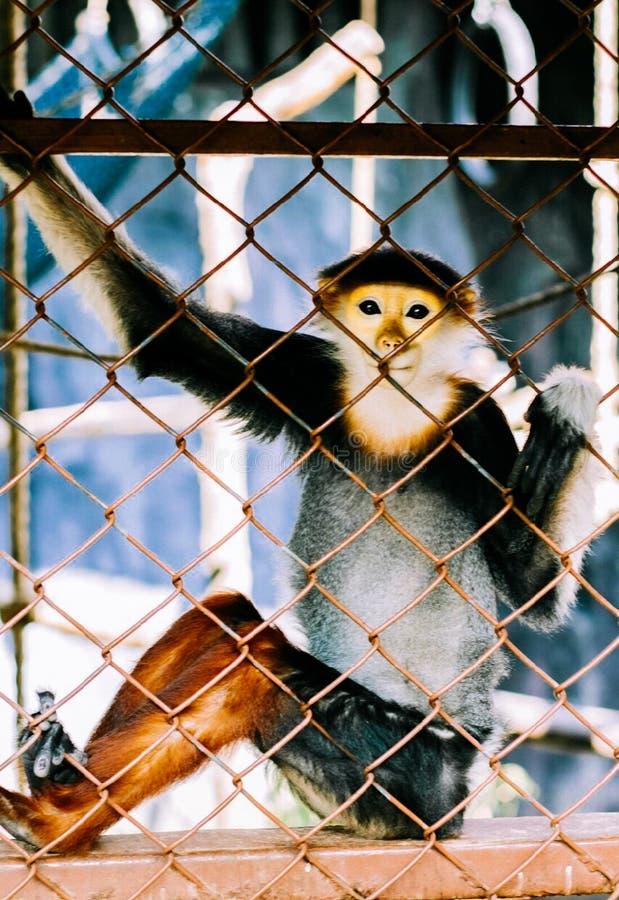 孤独的猴子 免版税库存照片