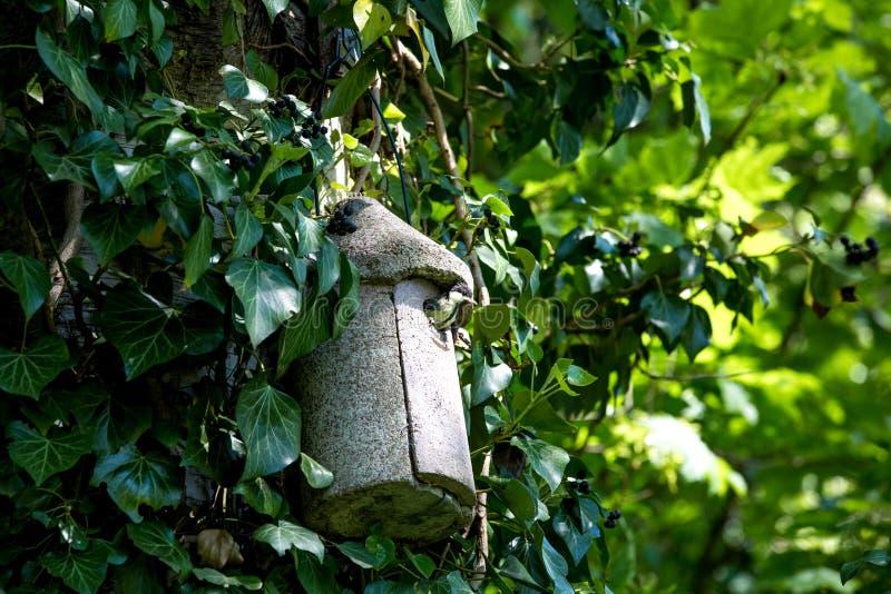 孤独的鸟在树上小屋里 库存照片