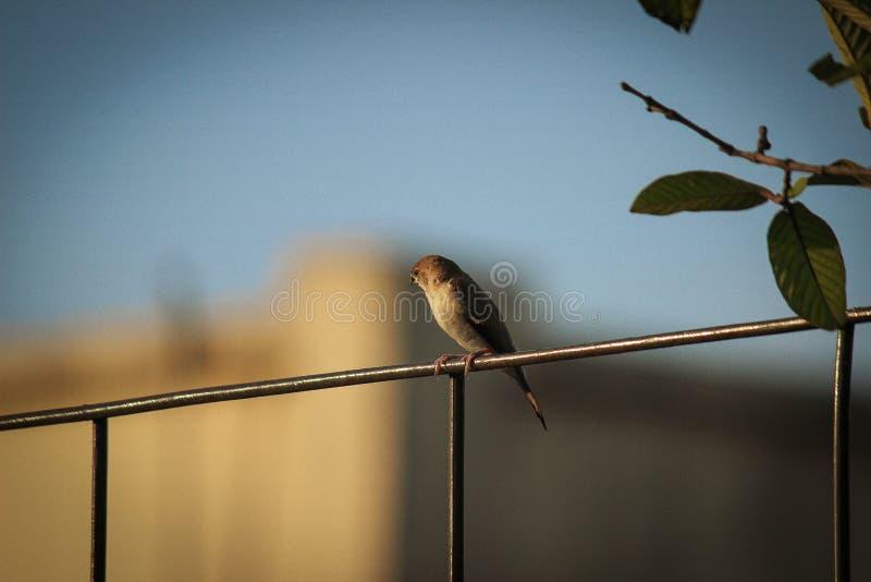 孤独的鸟 免版税库存照片