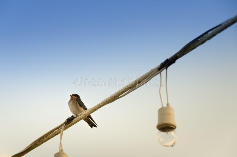 孤独的鸟 免版税图库摄影