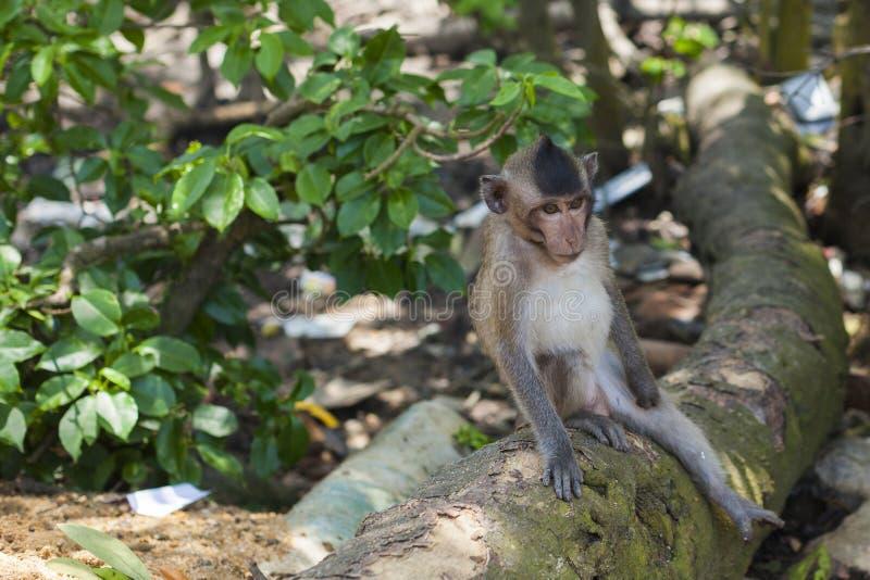 孤独的猴子 库存图片
