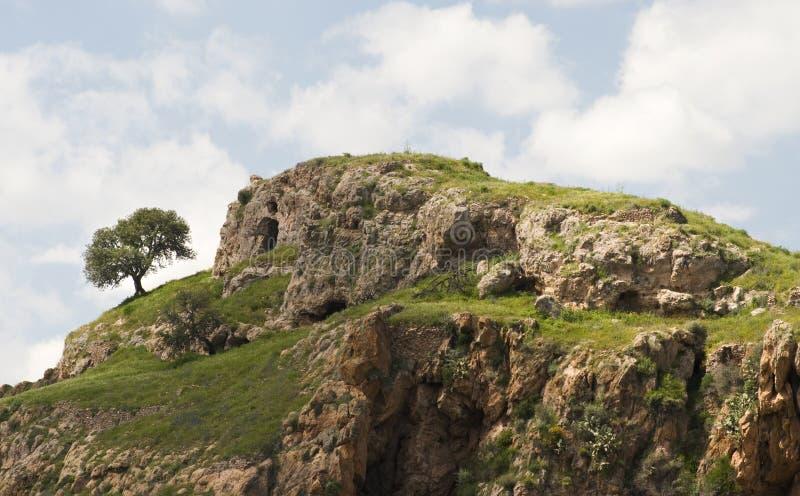 孤立土坎岩石结构树 图库摄影