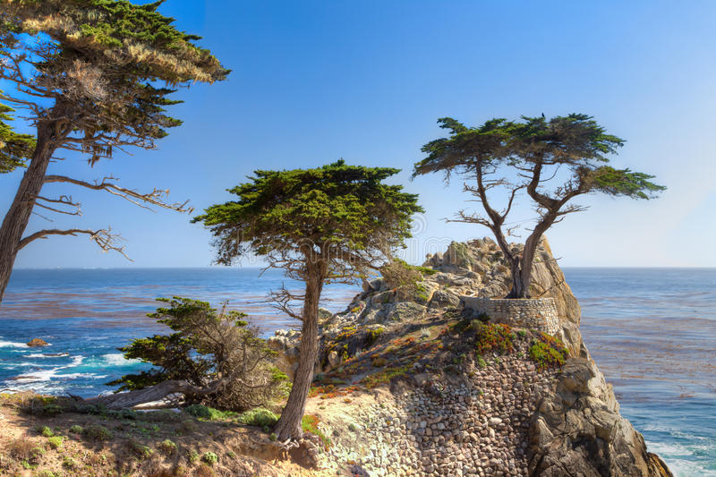 孤立塞浦路斯树 免版税库存图片