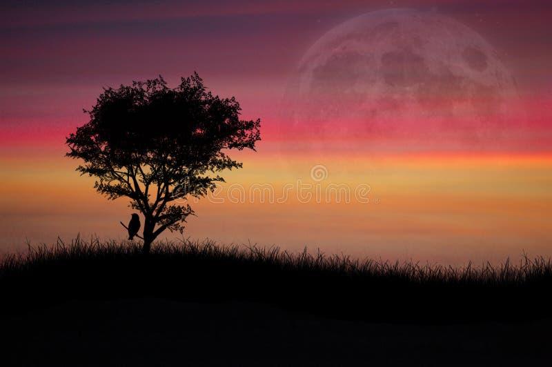 孤立日落结构树 免版税库存照片